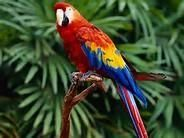 Parrot Birds for sale in Columbus, GA, USA. price: NA