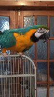 Parrot Birds for sale in Savannah, GA, USA. price: NA