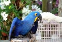 Parrot Birds for sale in Columbus, OH, USA. price: NA