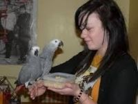 Parrot Birds for sale in Peoria, AZ, USA. price: NA