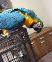 Parrot Birds for sale in Dallas, TX, USA. price: NA
