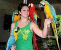 Parrot Birds for sale in Concord, CA, USA. price: NA