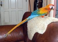 Parrot Birds for sale in Wellington, TX 79095, USA. price: NA