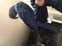 Parrot Birds for sale in Marbury, MD 20658, USA. price: NA