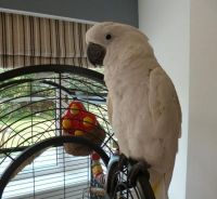 Parrot Birds for sale in Denver County, CO, USA. price: NA