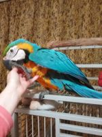 Parrot Birds for sale in Washington, DC, USA. price: NA