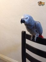 Parrot Birds for sale in New York State Thruway, Scarsdale, NY 10583, USA. price: NA