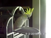 Parrot Birds Photos