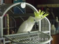Parrot Birds for sale in Thomasville, NC 27360, USA. price: NA