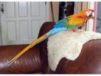 Parrot Birds for sale in United States of America, Douala, Cameroon. price: NA