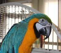 Parrot Birds for sale in Denver, CO, USA. price: NA