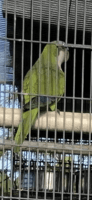 Parrot Birds for sale in Fort Lauderdale, FL, USA. price: NA