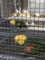 Parrot Birds for sale in Delaware Ave, Dover, DE 19901, USA. price: NA
