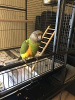 Parrot Birds for sale in Fort Myers, FL, USA. price: NA