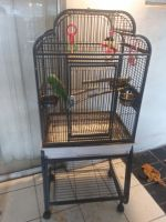 Parrot Birds for sale in North Lauderdale, FL, USA. price: NA