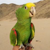 Parrot Birds for sale in New York, NY, USA. price: NA