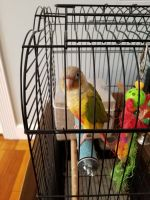 Parrot Birds for sale in 81 Division Ave, Garfield, NJ 07026, USA. price: NA