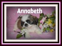 Pekingese Puppies for sale in Canton, OH, USA. price: NA