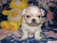 Pekingese Puppies for sale in Lucerne Valley, CA 92356, USA. price: NA