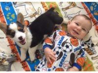 Pembroke Welsh Corgi Puppies for sale in Birmingham, AL, USA. price: NA