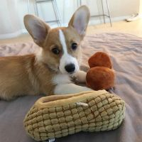 Pembroke Welsh Corgi Puppies for sale in Palm Springs, CA, USA. price: NA