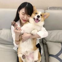 Pembroke Welsh Corgi Puppies for sale in Fort Wayne, IN, USA. price: NA