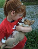 Pembroke Welsh Corgi Puppies for sale in Austin, TX 78741, USA. price: NA