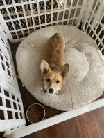 Pembroke Welsh Corgi Puppies for sale in Jonesboro, AR 72401, USA. price: NA