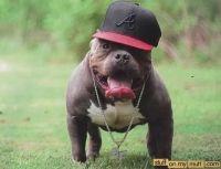 Perro Cimarron Puppies Photos