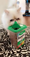 Persian Cats for sale in Stockade Ln, Denton, TX 76209, USA. price: NA