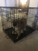 Pomeranian Puppies for sale in 8640 S Oketo Ave, Bridgeview, IL 60455, USA. price: NA