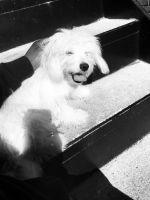 Pomeranian Puppies for sale in GA-85, Riverdale, GA, USA. price: NA