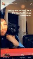 Pomeranian Puppies for sale in 5151 Germantown Ave, Philadelphia, PA 19144, USA. price: NA