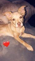 Pomeranian Puppies for sale in 3339 Coronado Ave, Hemet, CA 92545, USA. price: NA