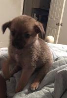 Pomeranian Puppies for sale in Cabana Square, Mobile, AL 36609, USA. price: NA