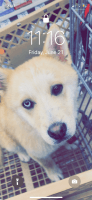 Pomsky Puppies for sale in Elkhart, IN, USA. price: NA