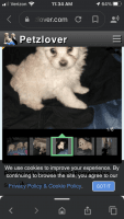 Poodle Puppies for sale in Orlando, FL, USA. price: NA