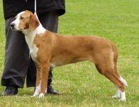 posavac hound dog