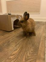 Rabbit Rabbits Photos