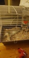Rabbit Rabbits for sale in Perth Amboy, NJ 08861, USA. price: NA