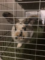Rabbit Rabbits for sale in 5033 Twining Dr, Oklahoma City, OK 73145, USA. price: NA