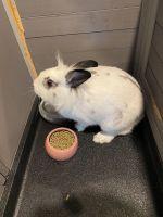 Rabbit Rabbits for sale in McKinney, TX, USA. price: NA