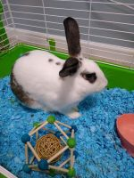 Rabbit Rabbits for sale in Chesterfield, VA 23832, USA. price: NA