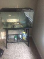 Red-eared slider turtle Reptiles for sale in 1606 Lenox Park Dr, Gainesville, GA 30507, USA. price: NA