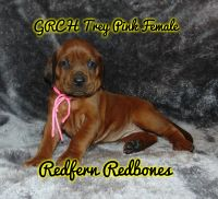 Redbone Coonhound Puppies for sale in 11822 Valley Lake Rd, Waldron, AR 72958, USA. price: NA