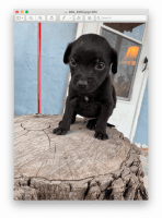 Rottweiler Puppies for sale in San Angelo, TX, USA. price: NA