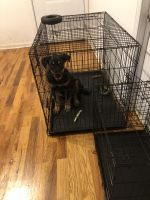 Rottweiler Puppies for sale in Homewood, IL, USA. price: NA
