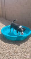 Rottweiler Puppies for sale in Apache Junction, AZ 85119, USA. price: NA