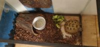 Russian Tortoise Reptiles for sale in Medford, OR, USA. price: NA