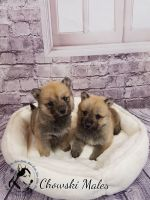 Sakhalin Husky Puppies for sale in California Ave, Joint Base Andrews, MD 20762, USA. price: NA